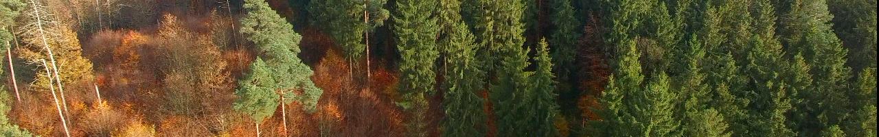 Wald1